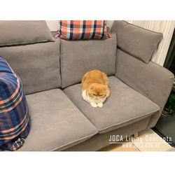 CAROX以色列貓抓布