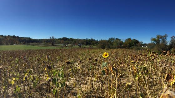 Colby Farms
