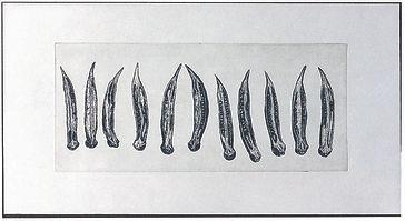 オクラ2分の1-2.jpg
