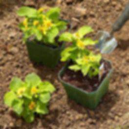 planting website photo.jpg