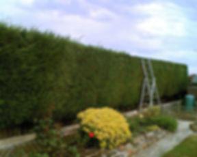 hedge cutting website.jpg