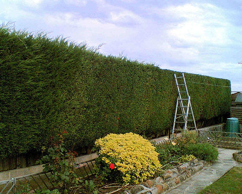 hedge cutting website.jpg