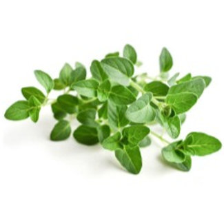 Fresh Oregano (50g)