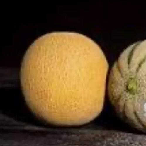 Galia Melon (each)