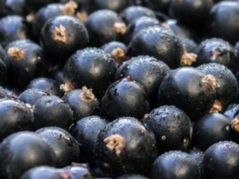 Freeze Dried Blackcurrants (per 20g)