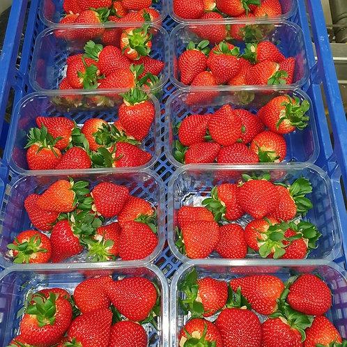 Fresh strawberries 4 punnets for £9