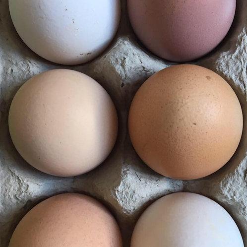 6 MIXED Free Range Eggs