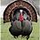 Thumbnail: Free Range, Herb-Raised Turkey (5-6kg remaining)