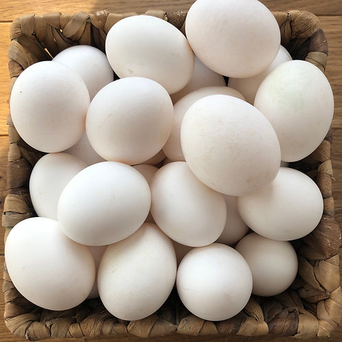 12 WHITE Free Range Eggs.