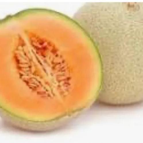 Canteloupe Melon (each)
