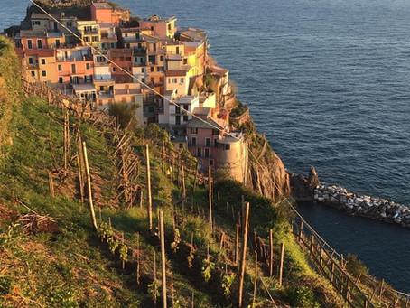 How to start a vineyard in Cinque Terre