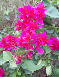 Fleur, Voyage en Inde du sud, Ayurvéda, Massages ayurvédiques, Kerala