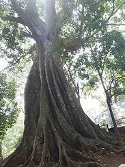 STAGE D'ÉTÉen forêt de Brocéliande yoga nantes 2