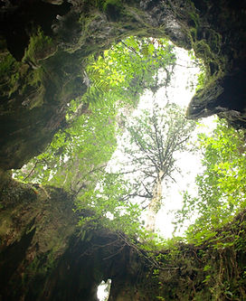 Coeur arbre.jpg