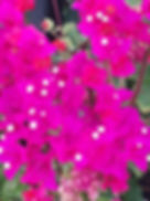Fleur, Offrande, Voyage en Inde du sud, Yoga, Ayurvéda, Kerala