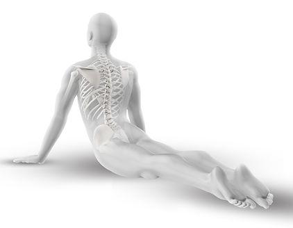 Stage d'antomie et yoga, perfectionnement e yoga à Nantes, comment prépare une posture, points clefs, précautions, adaptations