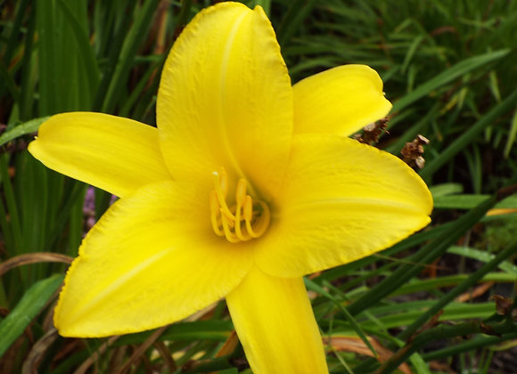 Yellow Pinwheel