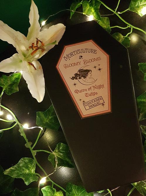 'Queen of Night' Black Tulip Coffin