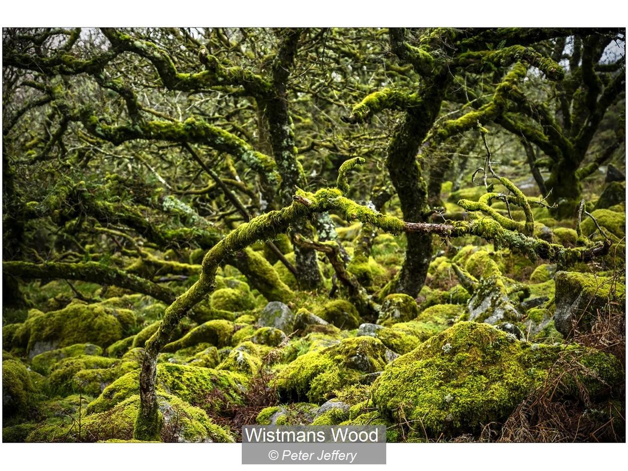 Wistmans Wood_Peter Jeffery.jpg