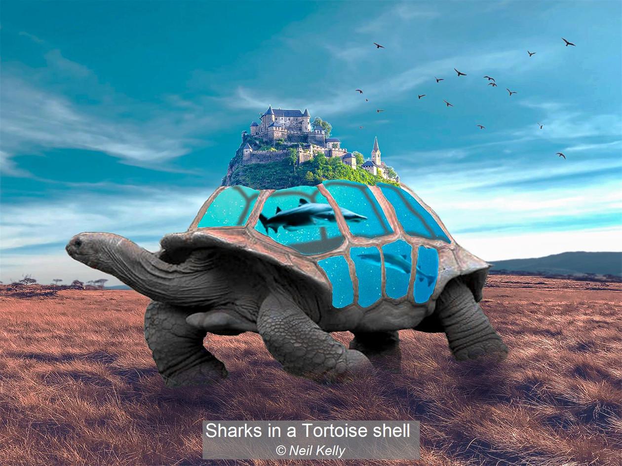Sharks in a Tortoise shell_Neil Kelly.jp