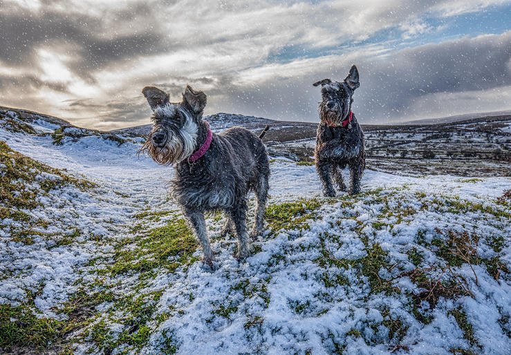 Jan Lunn_Snowy Dog Walk
