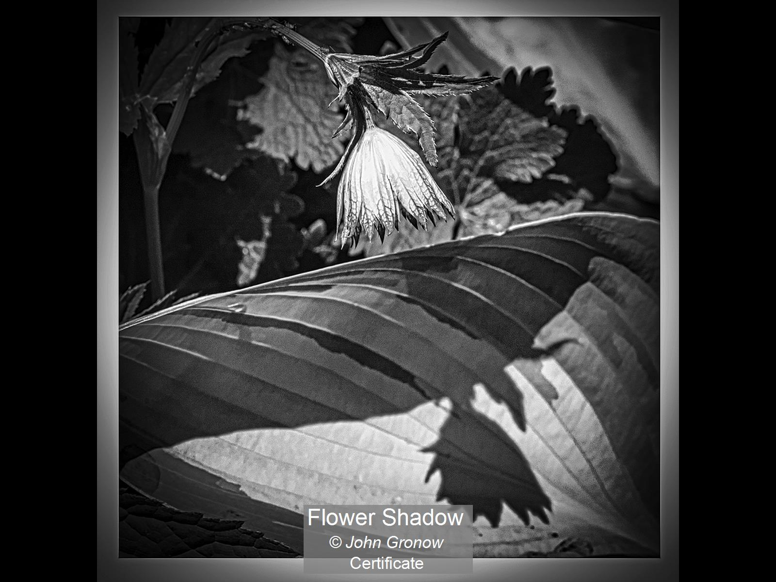 Flower Shadow_John Gronow_Cert