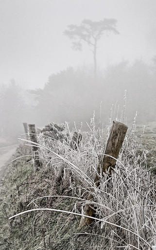HC_Jeannine King_White Frost