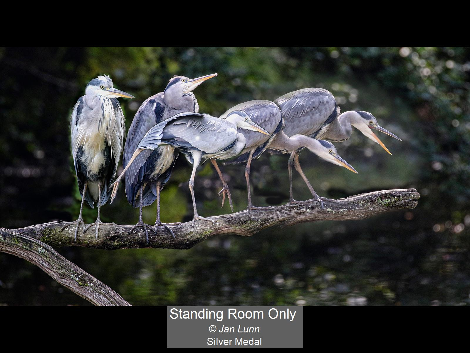 Standing Room Only_Jan Lunn_Silver