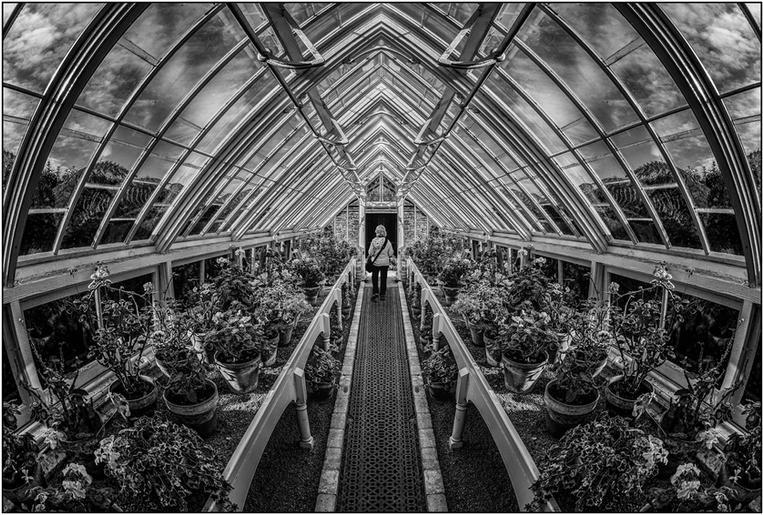 Comm_Roger Edwardes_Through the Greenhouse