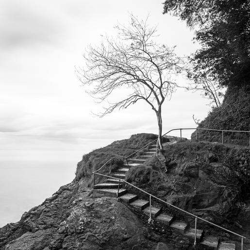 HC_David Eales_Coastal path Oddicombe