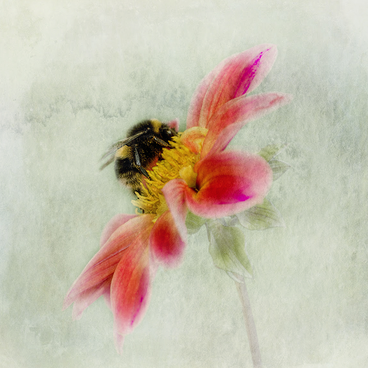 Frances Botwood_The Pollinator