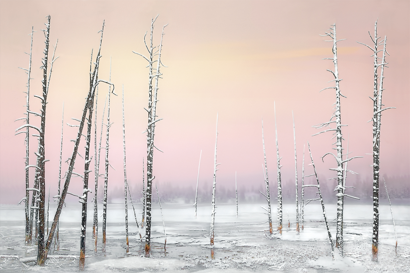 Pam Sherren_Skeletal Trees Yellowstone