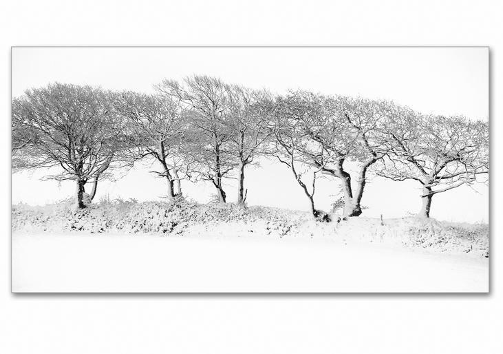 Jeannine King_Winter Trees