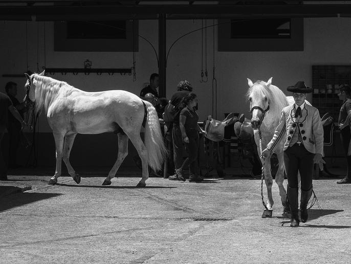 Mike Harris_White Horses on Parade