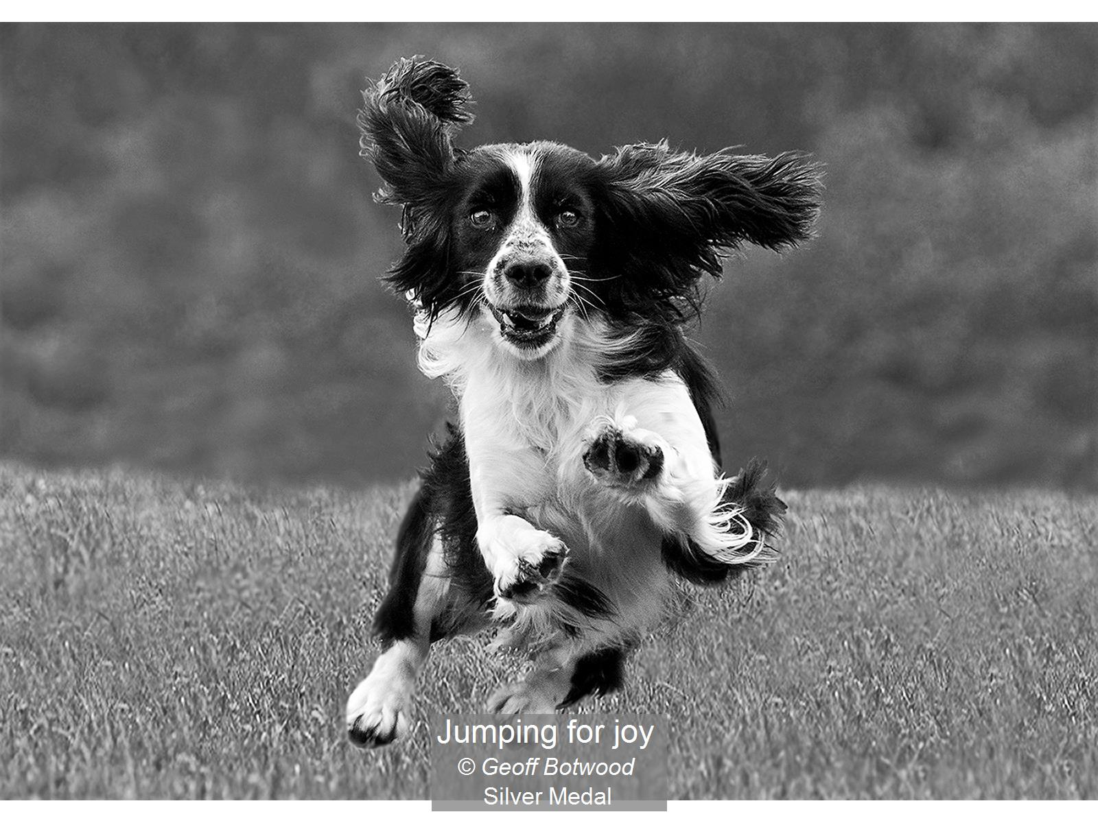 Jumping for joy_Geoff Botwood_Silver