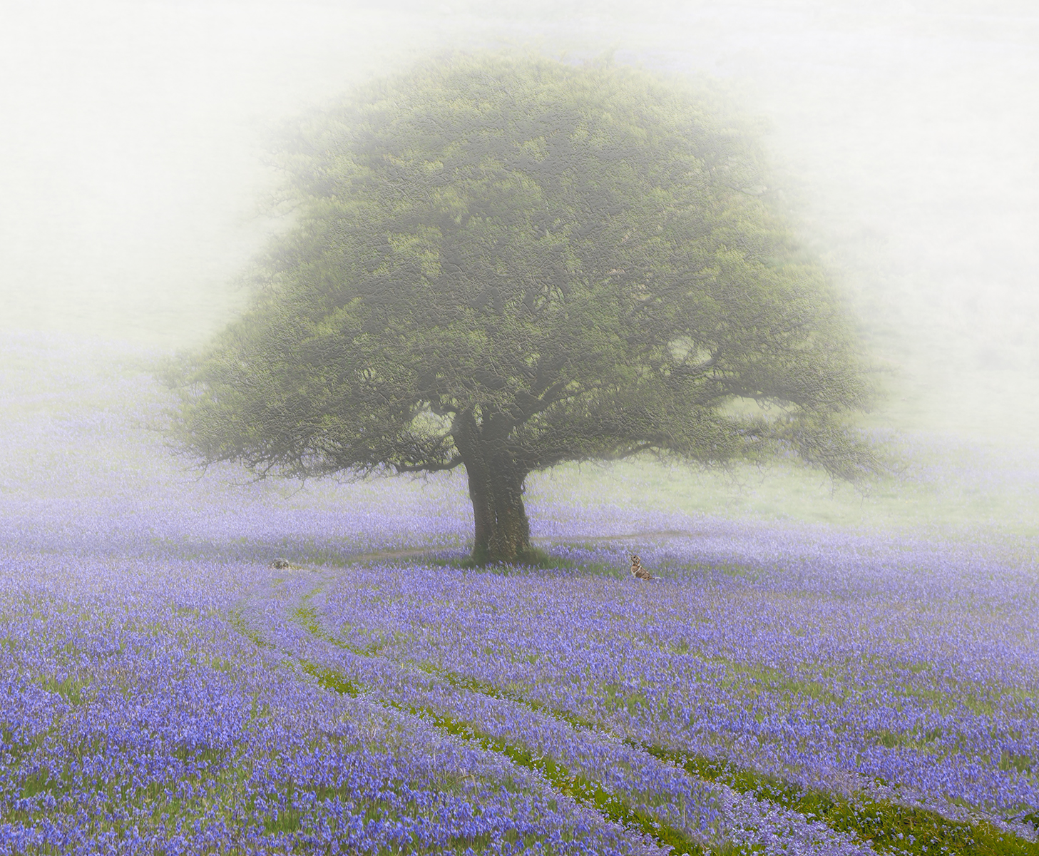 Julie McGowan_The Bluebell Meadow_None