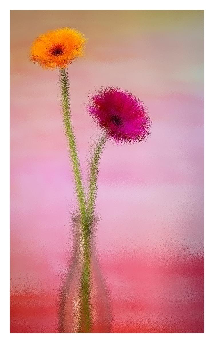 Mark Jeffery_FLOWERS THROUGH GLASS_Comm.
