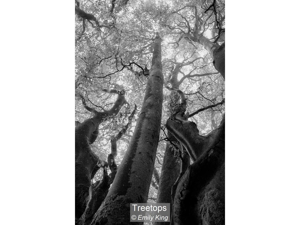 Treetops_Emily King.jpg