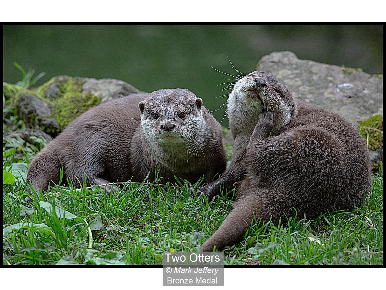 Two Otters_Mark Jeffery_Bronze
