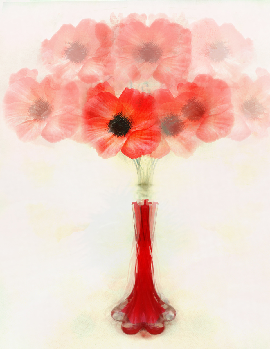 Abstract Poppies_Pam Sherren_Commended