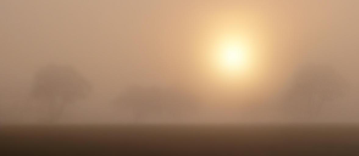 Jeannine King_Early Morning Mist