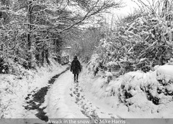 Mike Harris_A walk in the snow