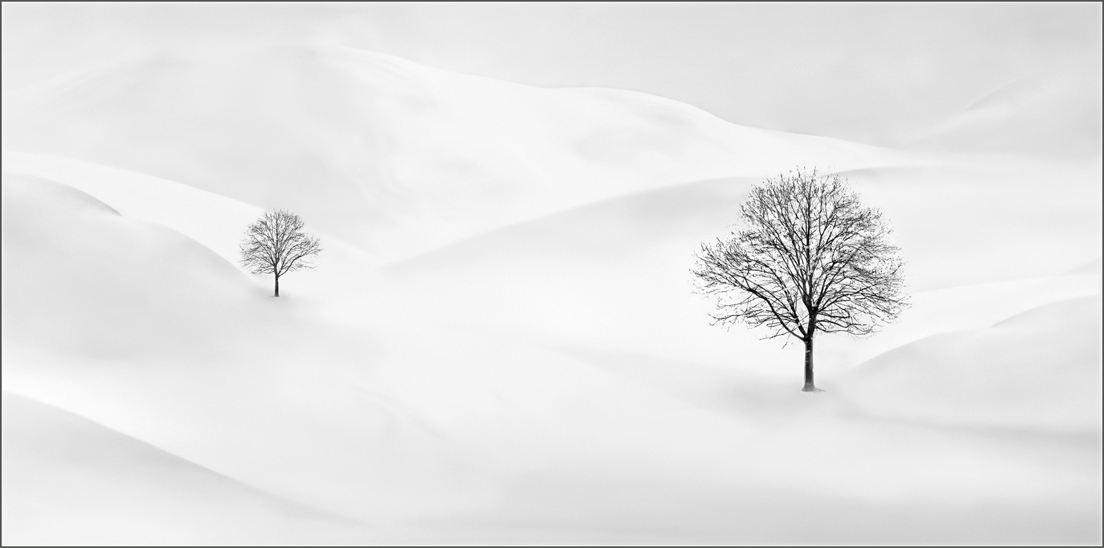 Pam Sherren_Trees in the Snow