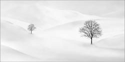 Pam Sherren_Trees in the Snow