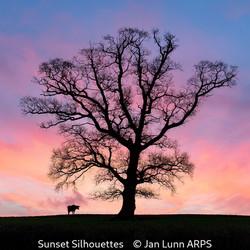 First_Jan Lunn_Sunset Silhouettes