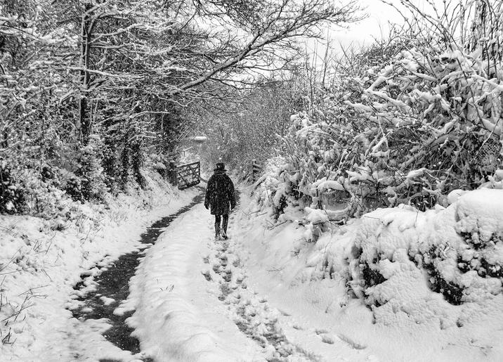 Gold_Mike Harris_A walk in the snow
