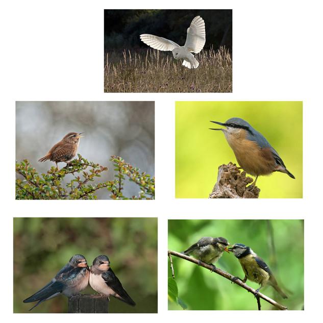 British Birds.jpg