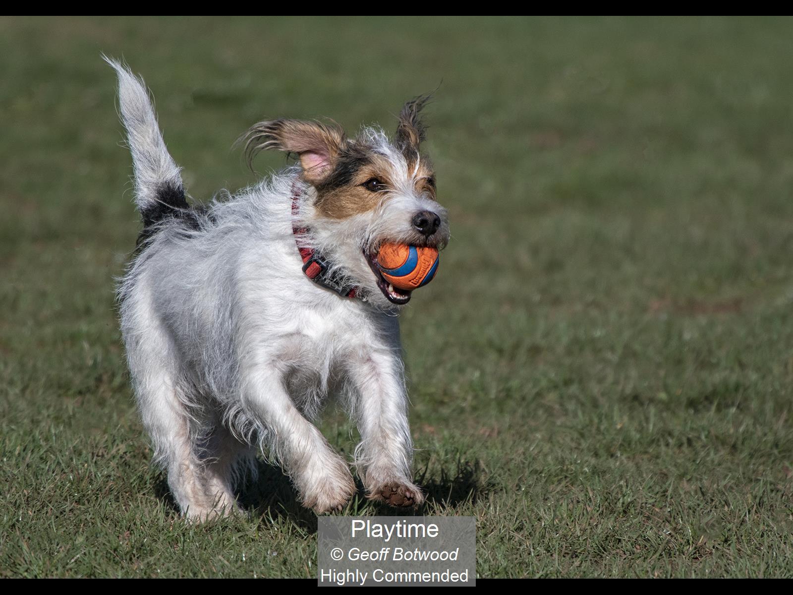 Playtime_Geoff Botwood_HComm
