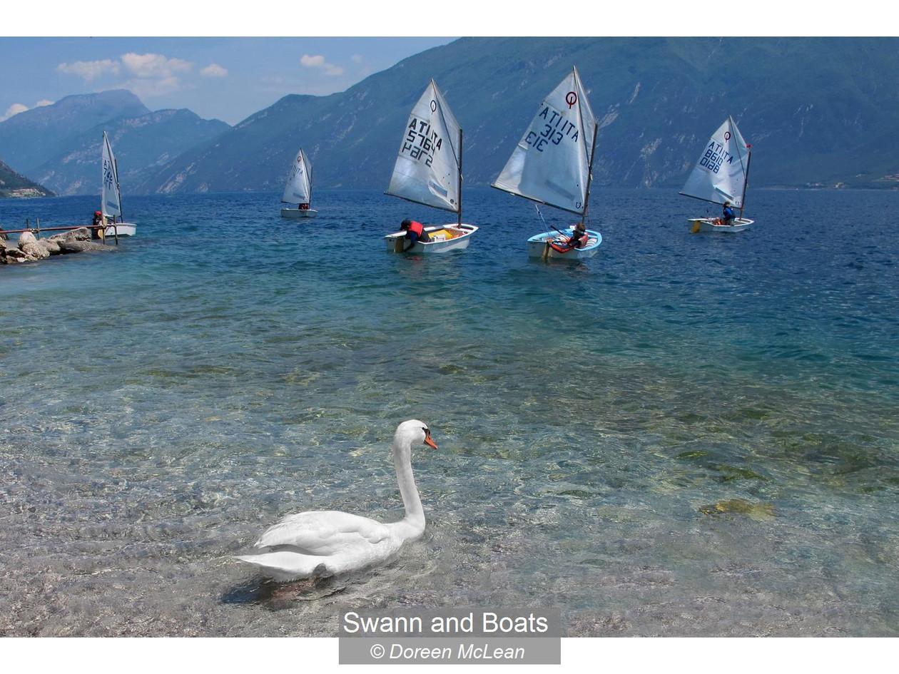 Swann and Boats_Doreen McLean.jpg