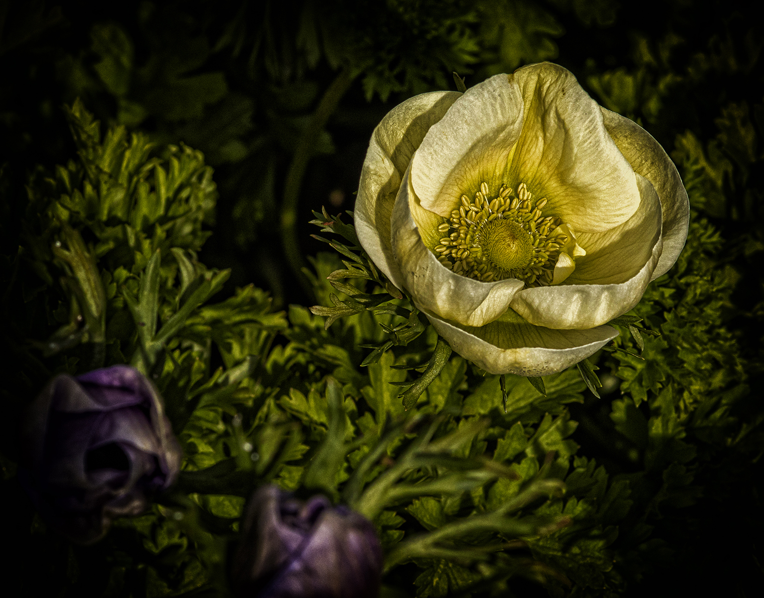 Anemones_Mike Harris_Highly Commended